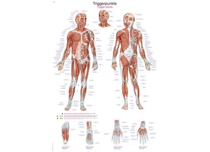 AL560   Plakat Trigger Points AL560